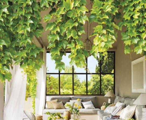 plantas-trepadoras-para-interior