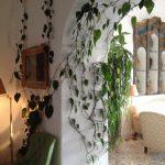 planta-trepadora-para-interior-3-150x150