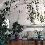 planta-trepadora-para-interior-4-150x150